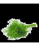 Mărar verde